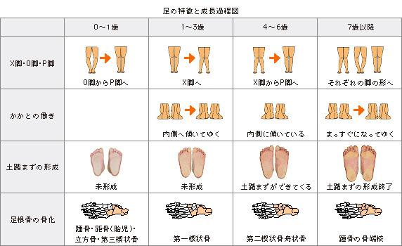 足の特長と成長過程図